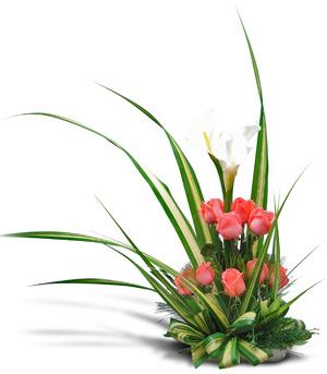 Welche Blumen Schenkt Man Zum Geburtstag